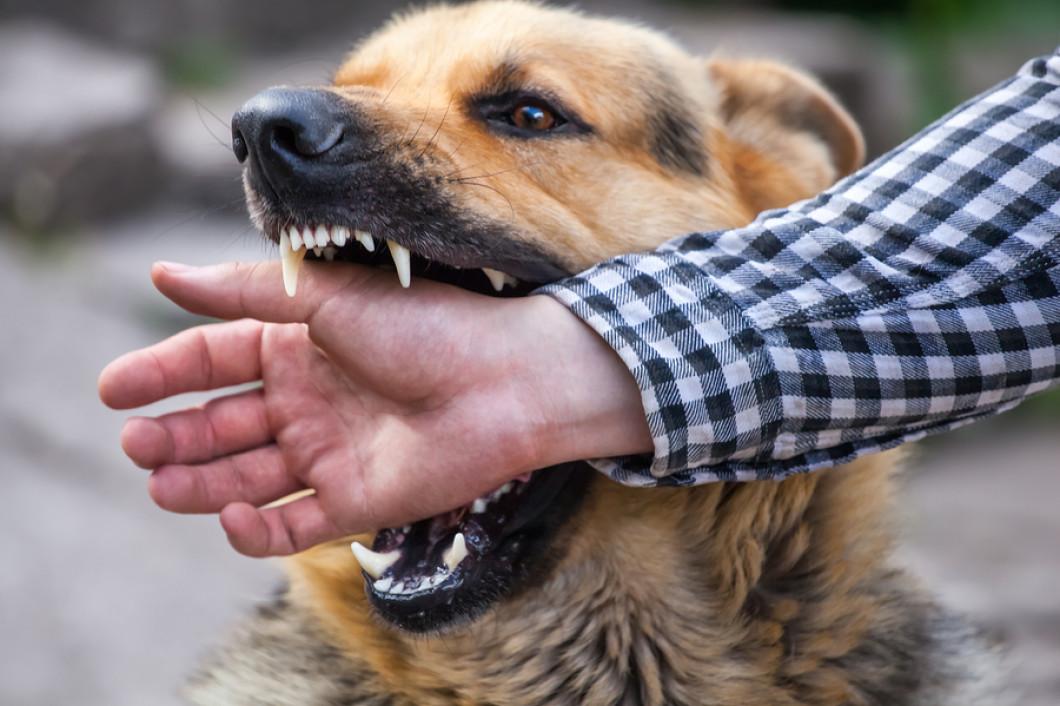 Animal Bites Treatment